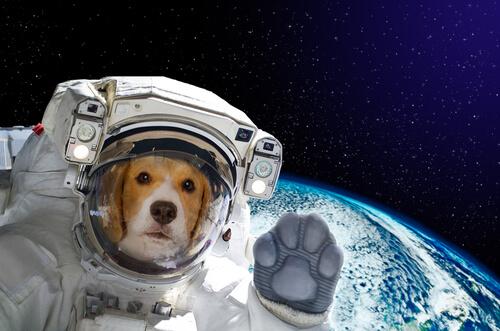 Laika, la perra que fue al espacio