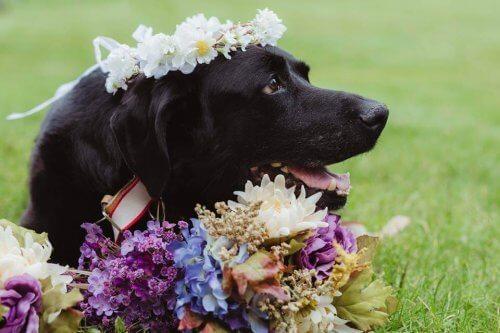 Mascotas en la boda: ¿sí o no?