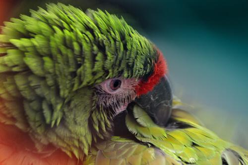 Las plumas, indicativas de enfermedades