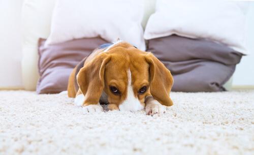 Los perros necesitan espacio