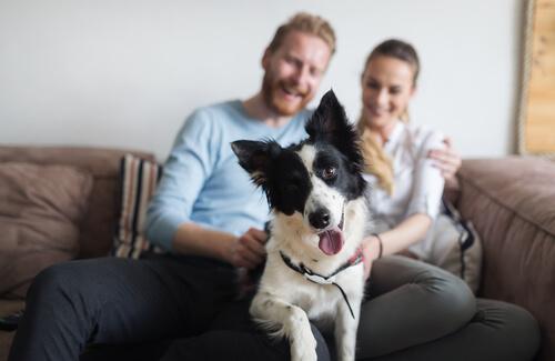 Millennials y mascotas
