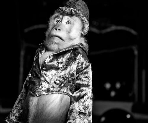 Mono con sombrero