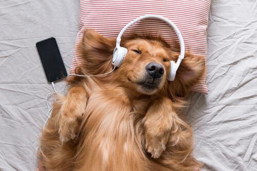 Música para perros con miedo