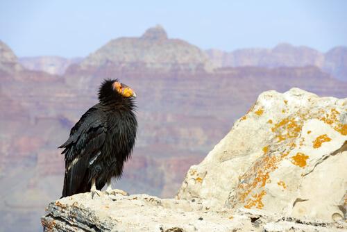Parque Nacional del Gran Cañón del Colorado