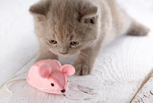 Peluche para gato casero