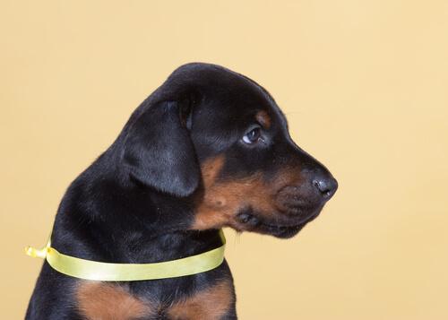 La iniciativa del lazo amarillo permite a tu perro tener su espacio