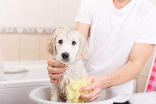 Perro con miedo al secador