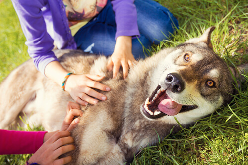 ¿Qué siente tu perro cuando te ve?