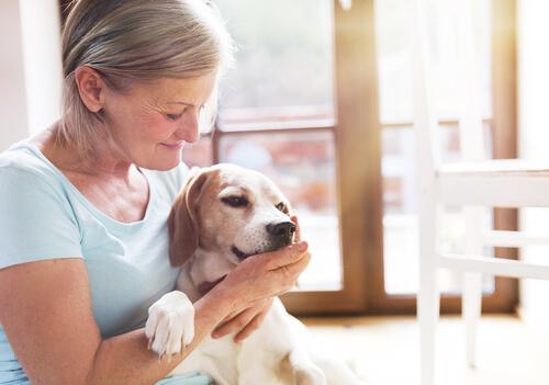 Perros de ayuda psicológica