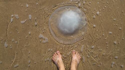 ¿Cómo actuar ante una medusa?