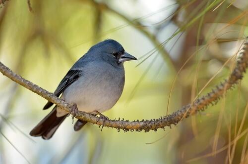 ¿Qué animales viven en Islas Canarias?