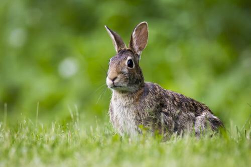 Plaga de conejos en Australia: consecuencias económicas