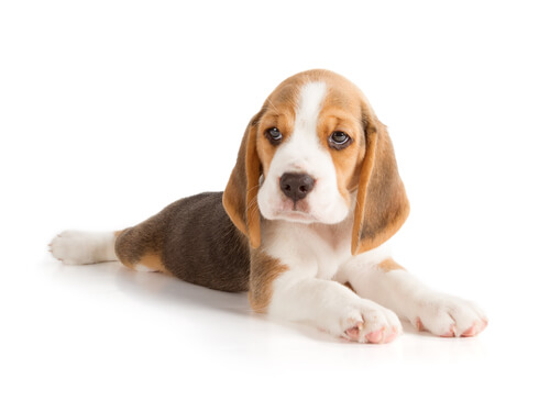Posturas en perros