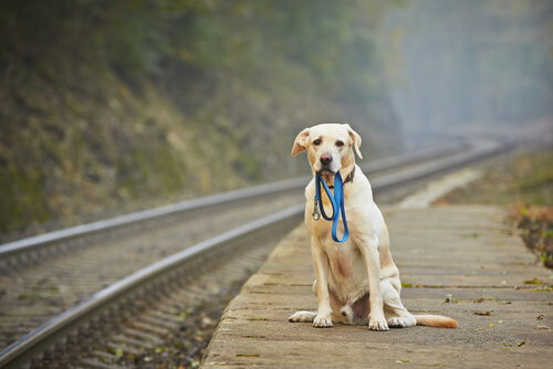 Qué hacer con un perro abandonado