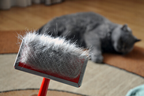 Los peligros de la muda de pelo en gatos