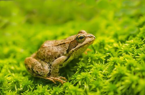 ¿Qué son los anfibios?