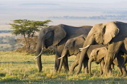 5 animales que viven en la sabana africana