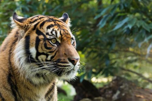La fauna en el sudeste asiático