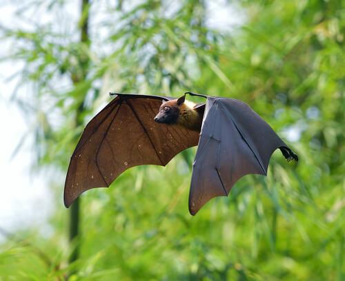Murciélagos y vampiros, una curiosa asociación
