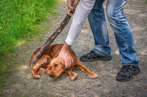 Veterinario para mascotas maltratadas