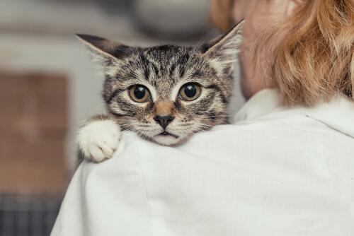 Ayuda veterinaria contra el maltrato animal