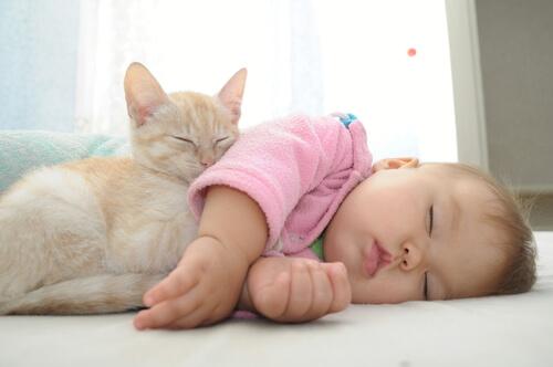 Vivir juntos los gatos y los bebés