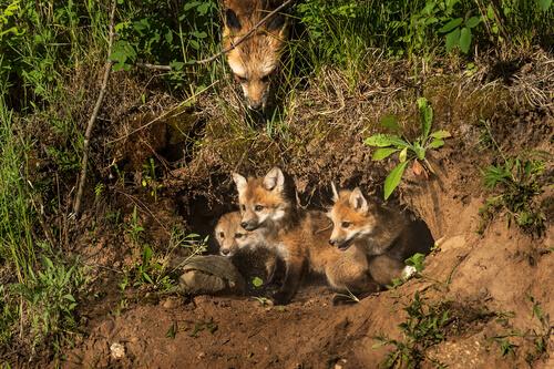 ¿Qué es un centro de recuperación de animales silvestres?