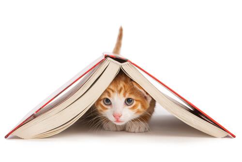 ¿Es realmente posible adiestrar a un gato?