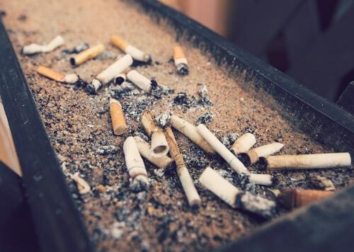 ¿Qué tanto afecta el humo del tabaco a las mascotas?