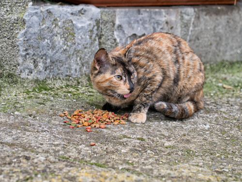 Alimentar gatos en la calle