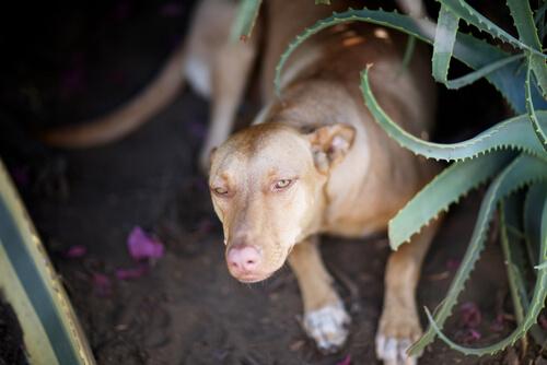 Aloe vera para perros