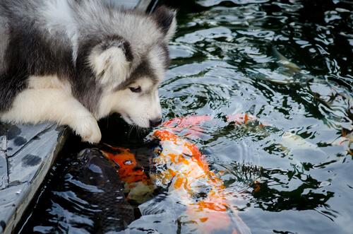 Las amistades entre especies de animales