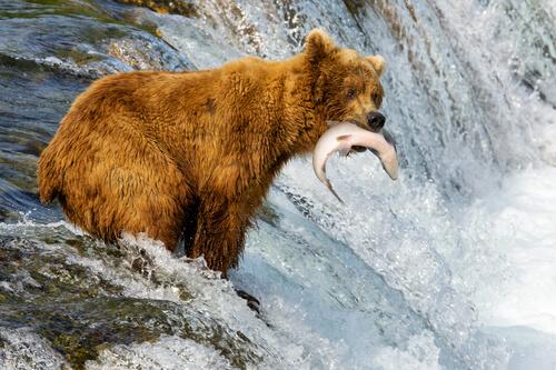 5 animales que viven en Alaska