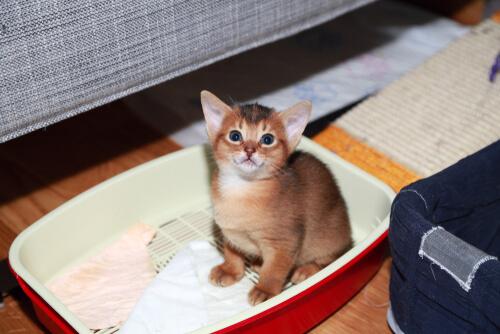 Aprendizaje de gatos