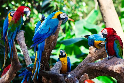 Biodiversidad de la Amazonia