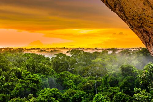 La biodiversidad del Amazonas, el río más vivo de la Tierra