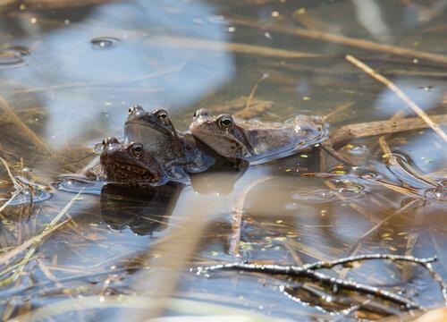 Brumación en reptiles y anfibios