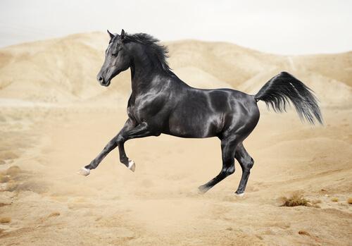 Cómo es la fauna en la península arábiga