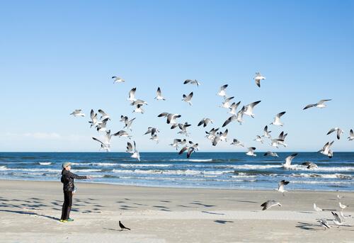 Canciones dedicadas a las aves