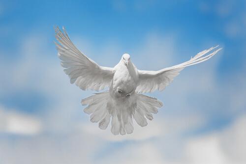 Canciones dedicadas a las palomas