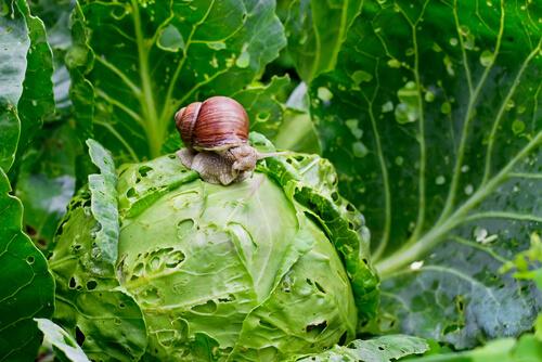 Caracol: alimentación y hábitat