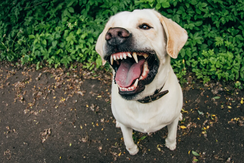 Causas de la agresividad en perros
