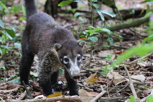 Cómo es la fauna en Centroamérica