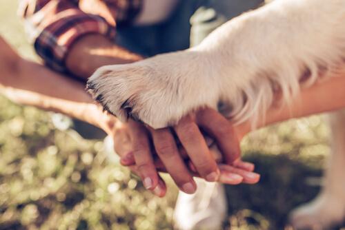 5 maneras de demostrarle a tu perro que lo quieres