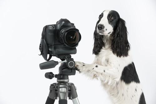 Cómo hacer buenas fotos a perros
