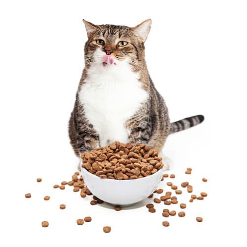 Cómo hacer que adelgace un gato