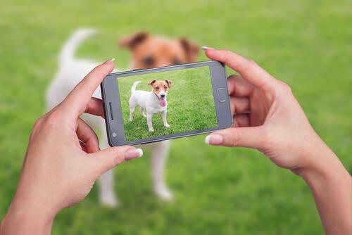 ¿Cómo hacer un vídeo a tu mascota?