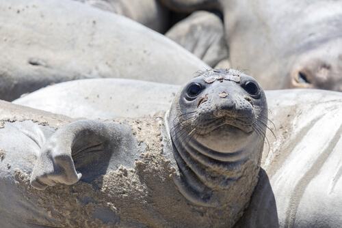 ¿Cómo es la vida de las focas? Todo sobre su comportamiento