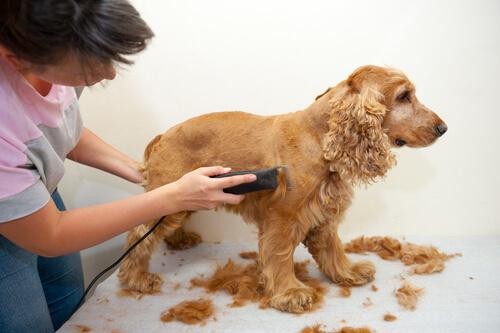 Cortar el pelo a tu perro en casa