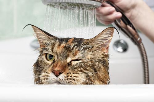 Esto es lo que tu gato odia
